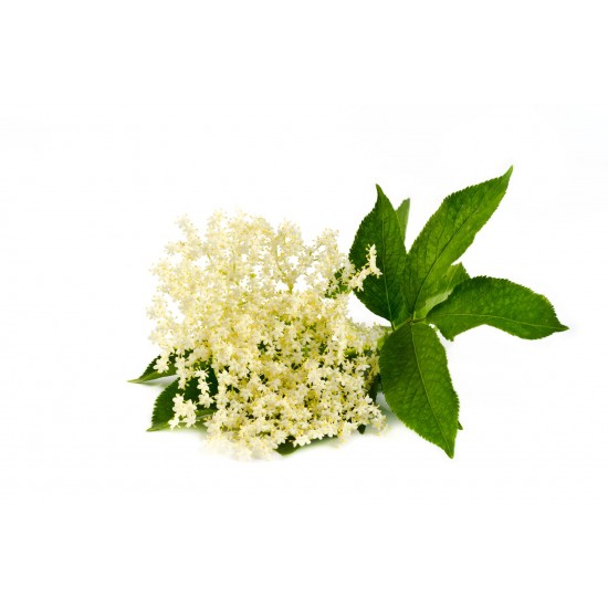 Elderflower - Short Fill