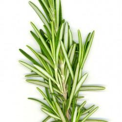 Rosemary - Short Fill