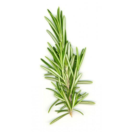 Rosemary (0mg)