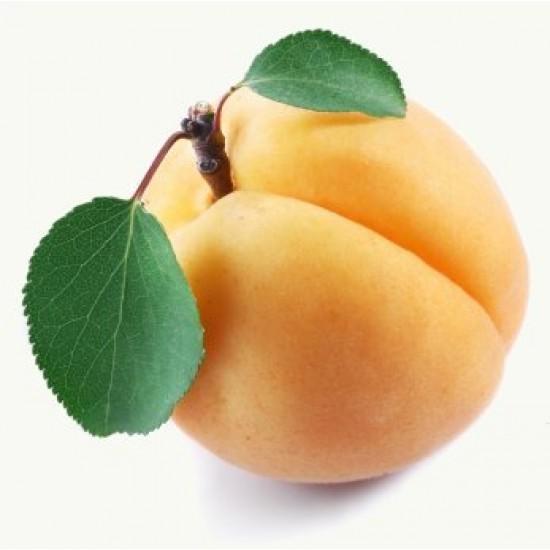 Apricot - Short Fill