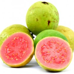 Guava - Short Fill