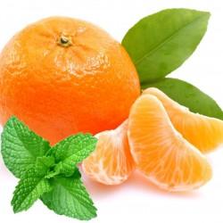Minty Orange - Short Fill